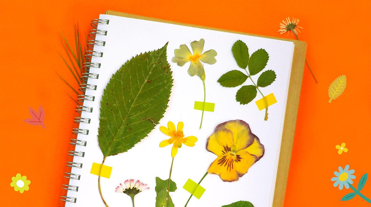"""""""Ton herbier de l'été"""", Pomme d'Api n°653, juillet 2020. Illustrations : Steffie Brocoli. Réalisation et photo : Anne Weiss."""
